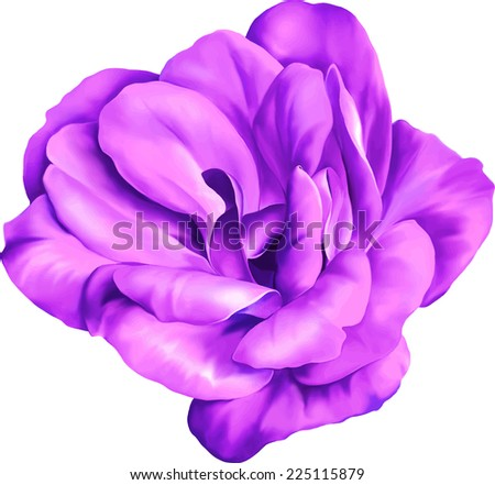 purple rose flower isolated on