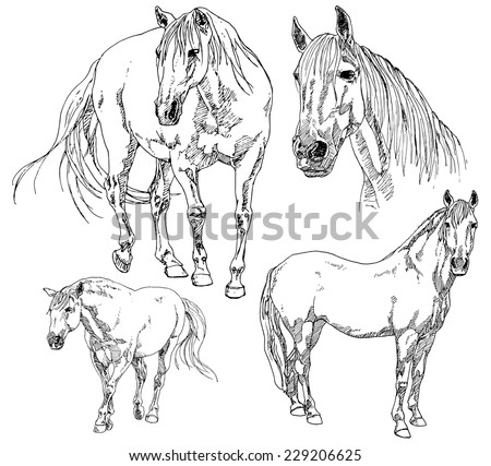 set of hand drawn horses