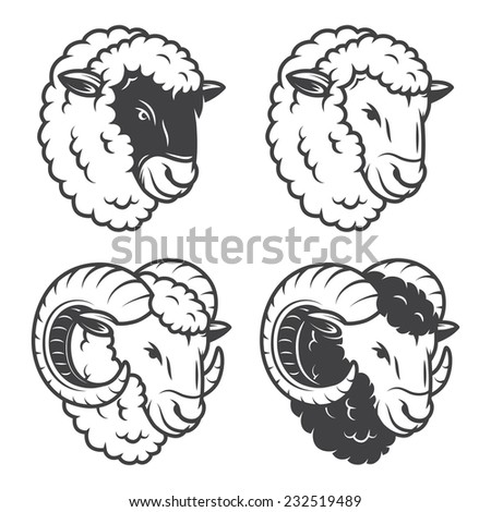 vector illustration of 4 sheeps