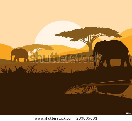 wild elephants in the forest