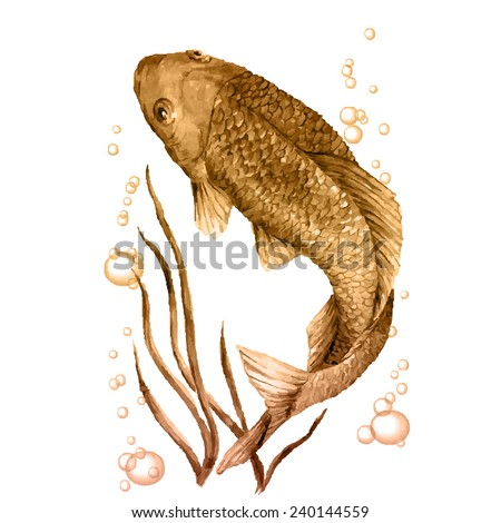 crucian carp in the water