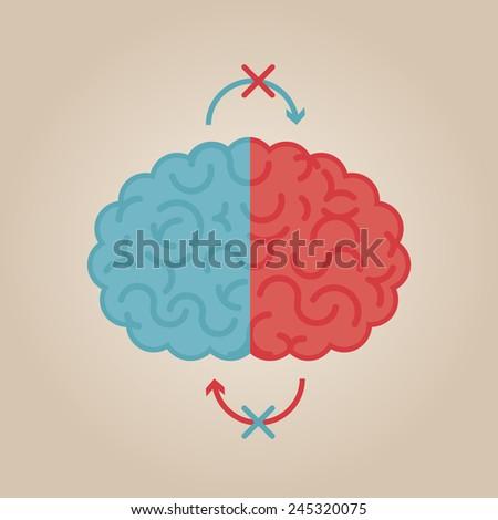 left   right human brain