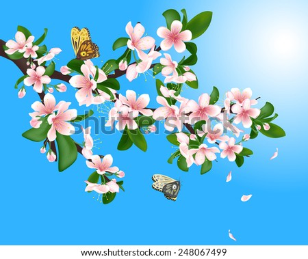 flowering cherry branch with