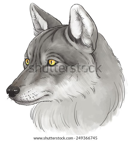 illustration head of wolf in