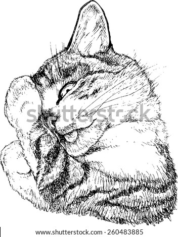 cat washes    vector