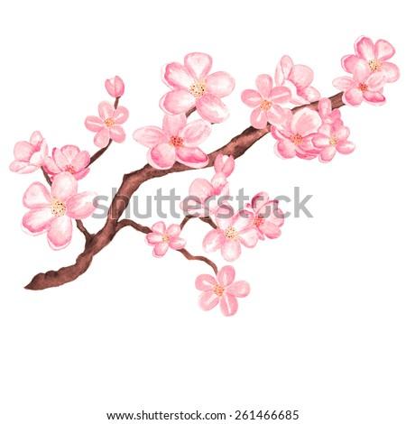 watercolor branch blossom