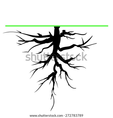 vector old tree root silhouette
