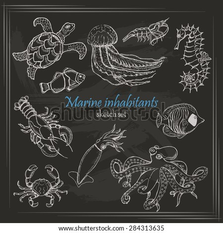 vector collection of sea