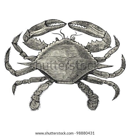 crab   vintage engraved