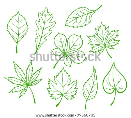 set of green leaves isolated on