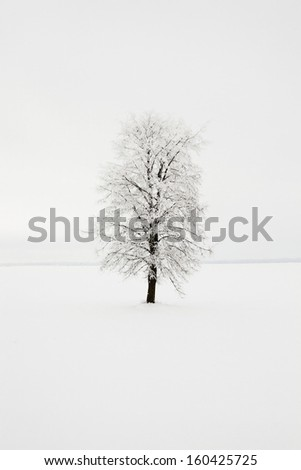 a birch tree in a winter season. day time