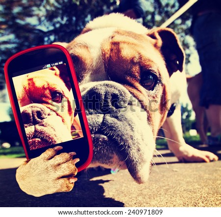 a bulldog close up of his face taking a selfie with a camera cell phone toned with a retro vintage instagram filter effect - stock photo