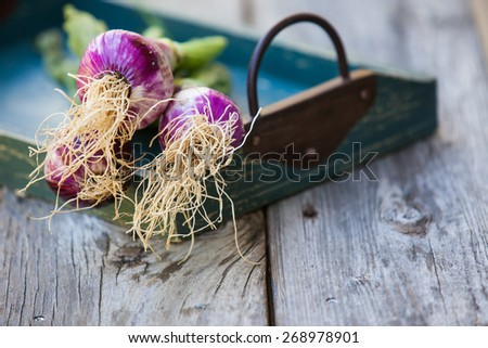 A bunch of fresh red onion  on wooden background. Also available in vertical format. - stock photo