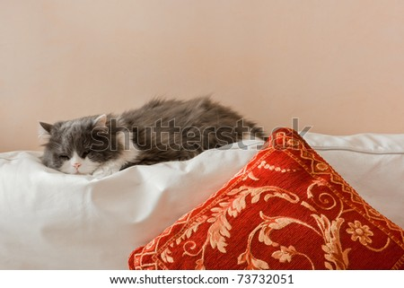 ,a cat that sleeps in house on the couch of the living room, - stock photo