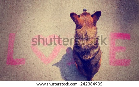a cute chihuahua mix sitting in the word love on a sidewalk toned with a retro vintage instagram filter effect  - stock photo