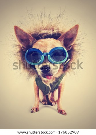 a cute chihuahua with a hoodie and goggles on with an instagram filter - stock photo