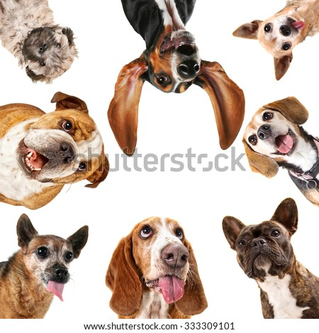 a cute group of dogs taking a selfie on a cell phone camera in a circle isolated on a white background  - stock photo