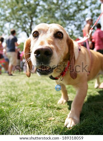 a cute mixed breed dog at a local park  - stock photo