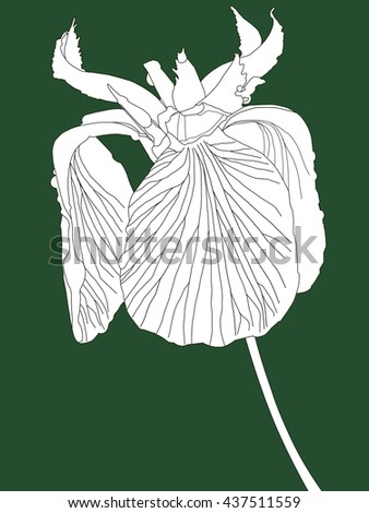 A digital line drawing of an iris with a coloured background                     - stock photo