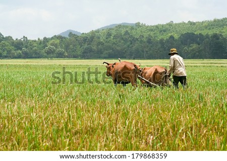 A farmer is ploughing on field by couple of ox - stock photo