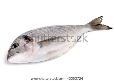A gilthead (dorade) isolated - stock photo