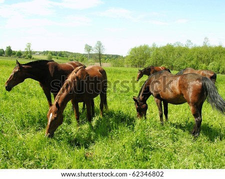 A herd of young horses grazing on the meadow
