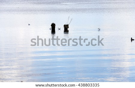 a little lake in the spring season. close-up. flying birds - stock photo