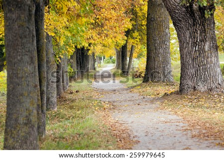 a narrow pedestrian sidewalk path in a city park. Autumn. - stock photo
