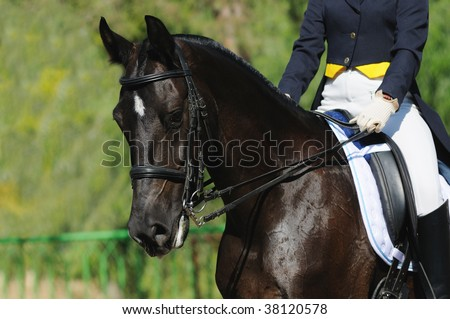 A portrait of raven horse dressage