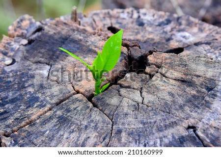 a strong seedling growing in the center trunk tree as a Concept of support building a future.. (focus on new life )