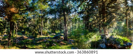 A sunny autumn day in the forest and the sun's rays through the branches of trees light forest clearing. - stock photo
