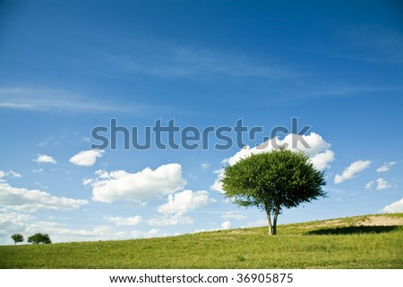 a tree in grassland - stock photo