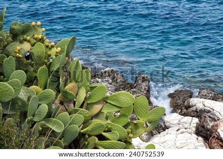 A view of prickly pear in Lipari,Sicily,Italy