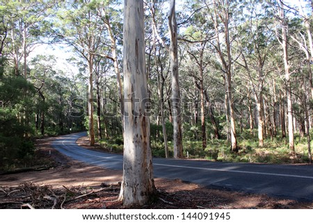A view of the highway through the  Boranup National park karri forest between Augusta and Yallingup Western  Australia on a sunny winter afternoon. - stock photo