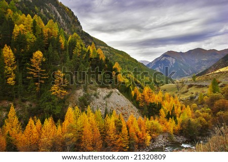 A wood and a mountain stream in the French Alps in the end of October - stock photo