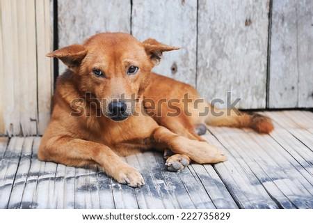 Abandoned dog on a street - stock photo