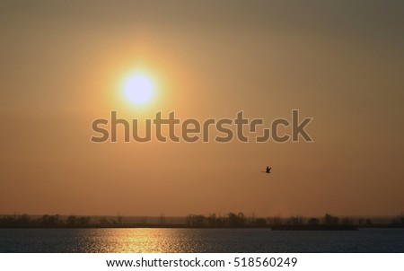 Abstract background sunset on the river. Bright sun and flying bird in the reddish sky. Solar water path.