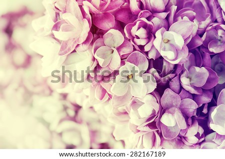 Abstract  floral background of spring lilac/ - stock photo