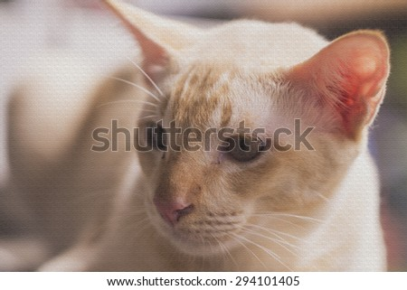 Adorable laying down cat with artificial texture