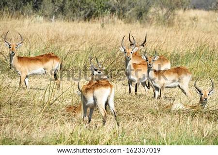 African wildlife - stock photo