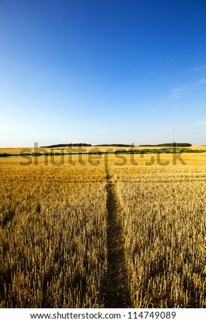 agricultural field in which people trod a path - stock photo