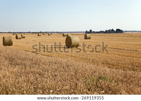 agricultural field on which collect wheat - stock photo