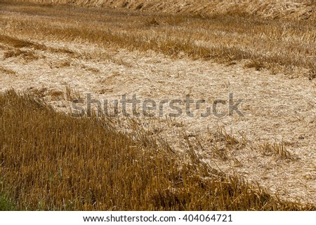 Agricultural field on which the harvesting of cereals, wheat. - stock photo