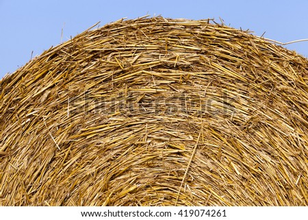 Agricultural field on which wheat crop harvested in the summer - stock photo