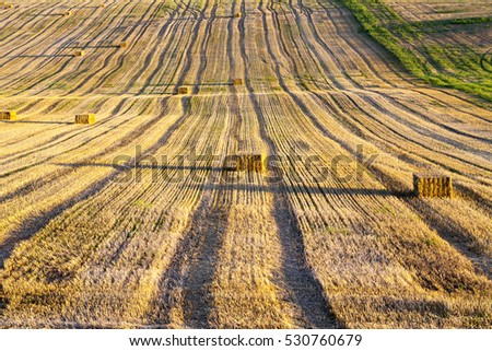 Agricultural field on which wheat harvest gathered. Bales of straw square shape. The photo was taken with a small depth of field.
