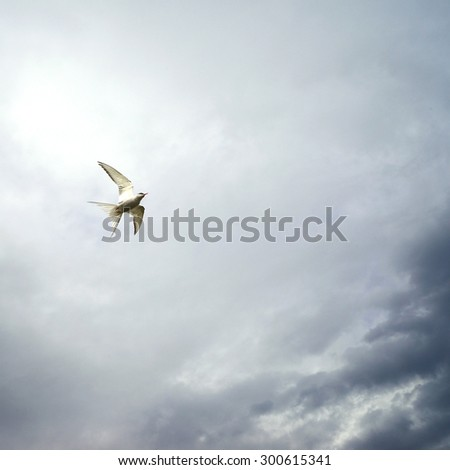 amazing shot of seagull in the sky - stock photo