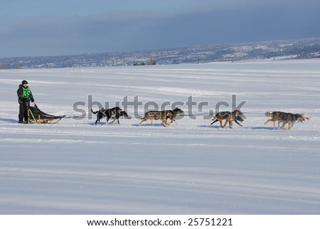 Amercain Dog Sled Derby Race - stock photo