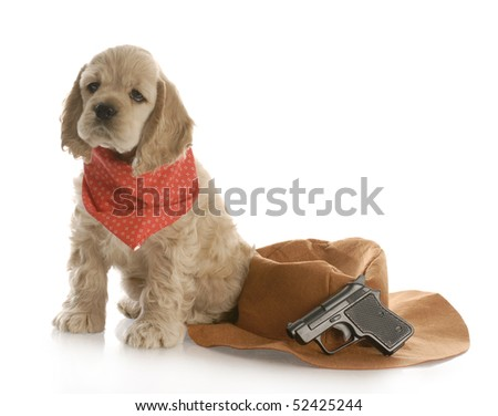 american cocker spaniel puppy dressed up as a cowboy with hat and gun with reflection on white background - stock photo