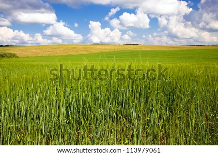 an agricultural field on which grow up cereals - stock photo