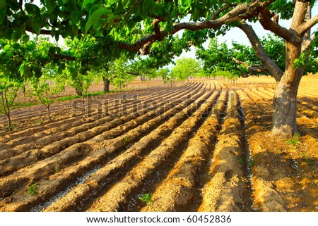 An early spring, farm land under the pear tree - stock photo